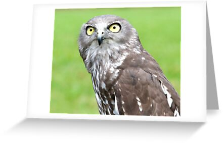 Looking Up - barking owl by Jenny Dean