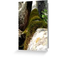 Moss on a large tree root Greeting Card