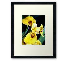 Yellow Iris - Kew Gardens, London Framed Print