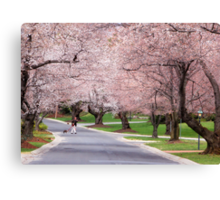 Canopy of Blossoms Canvas Print