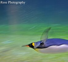 Penguin by Georgia Rose Smith