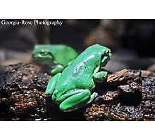 Green Frogs Photographic Print