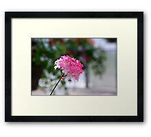 Small ode to spring joy - Verbena Framed Print