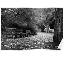 Botanic Bench Poster