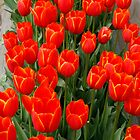 Red & Yellow Tulip Box in Nannup by Leonie Mac Lean