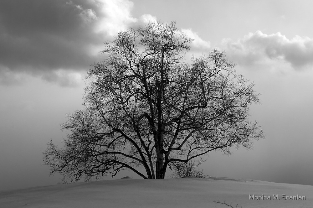 Just a Tree by Monica M. Scanlan