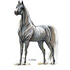 white arabian horse portrait by tarantella