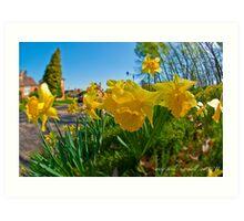 spring daffodils 1 Art Print