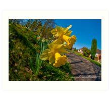 spring daffodils 3 Art Print