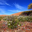 Wave Rock Wildflowers - Hyden  WA by Chris Paddick