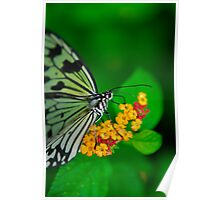 Butterfly Harvest Poster