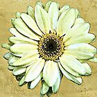 Yellow Gerbera - watercolour by PhotosByHealy