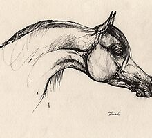 the arabian horse drawing by tarantella