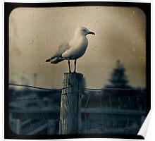 Seagull - Vintage lens Poster