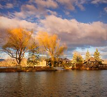 Golden Hour Willows by John  De Bord Photography