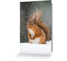 Cute Red Squirrel Greeting Card