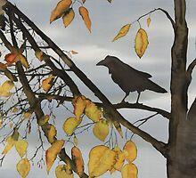Raven In Birch by carolyndoe