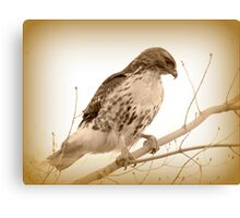 Riverfront Red Tail Canvas Print
