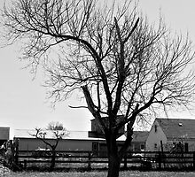 Another Boring Tree in Black and White by Schutte14