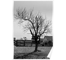 Another Boring Tree in Black and White Poster
