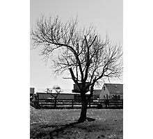 Another Boring Tree in Black and White Photographic Print