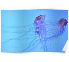 Jelly Fish - Atlanta Aquarium Poster