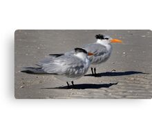 Greater Crested Terns Canvas Print