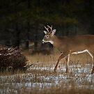 Nature Walk by Daniel  Parent