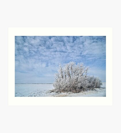 Frosty bush on prairie snow Art Print