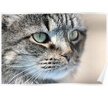 Cat in Thought Poster