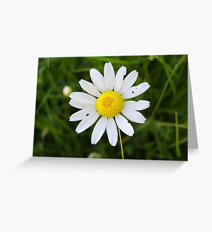 Fragility Greeting Card