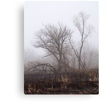 After The Brush Fire Canvas Print