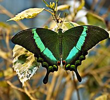 Green Butterfly by Kevin Frad