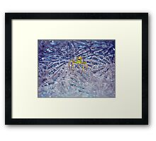 ©NS Ice Ice Baby Spider IA. Framed Print
