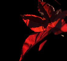 Red autumn by pulen