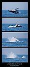 Humpback Breach sequence by Odille Esmonde-Morgan