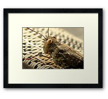 The Wise Ole Grasshopper ~ Seaside  Hopper Framed Print