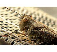 The Wise Ole Grasshopper ~ Seaside  Hopper Photographic Print