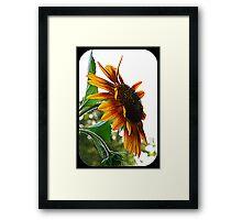 Sunflower Symbolism Framed Print