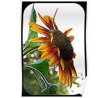 Sunflower Symbolism Poster