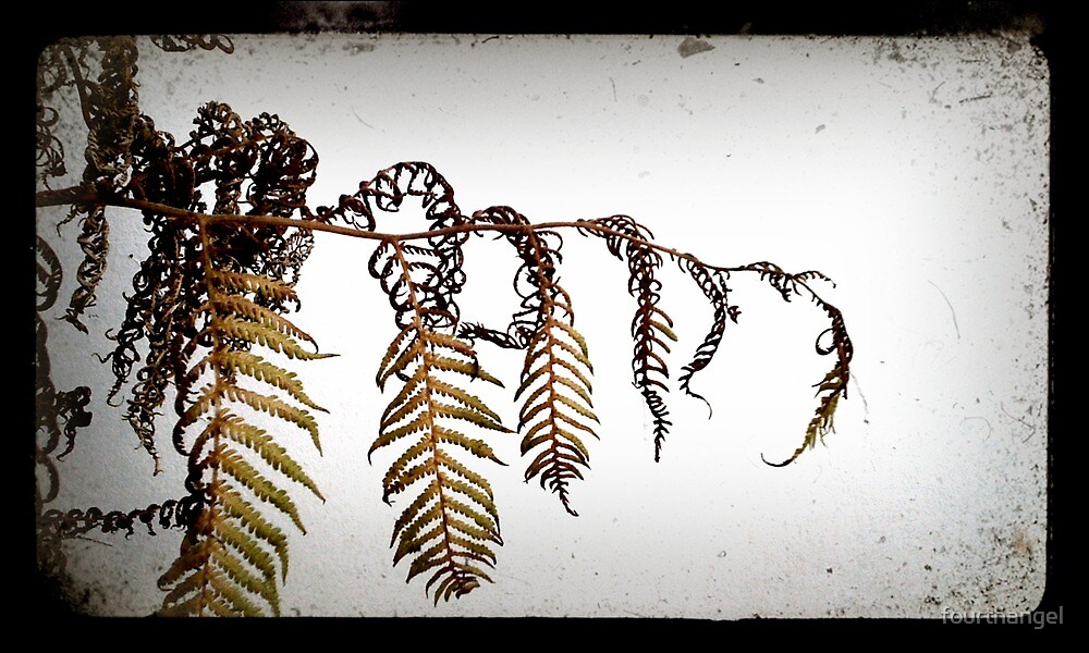 The fern's slow death by fourthangel