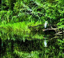 Carolina Wetlands by Randall Faulkner