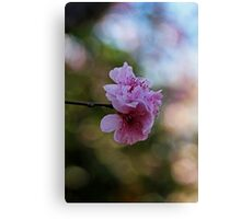 Before We Fade Away Canvas Print