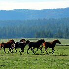 horses of summer by William Moffitt