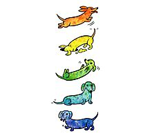 Watercolor Dachshunds Photographic Print