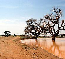 Mali by William Moffitt