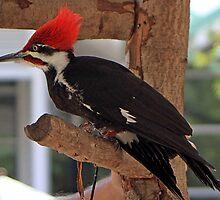 Woody Woodpecker by RebeccaBlackman