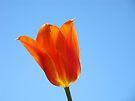 Tulip Flower Floral art Spring Blue Sky Baslee Troutman by BasleeArtPrints