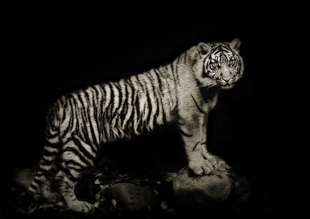 Tiger Night by Natalie Manuel
