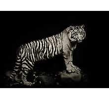 Tiger Night Photographic Print